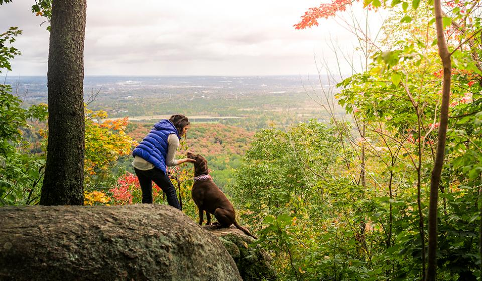 Dog on Gatineau Park in fall