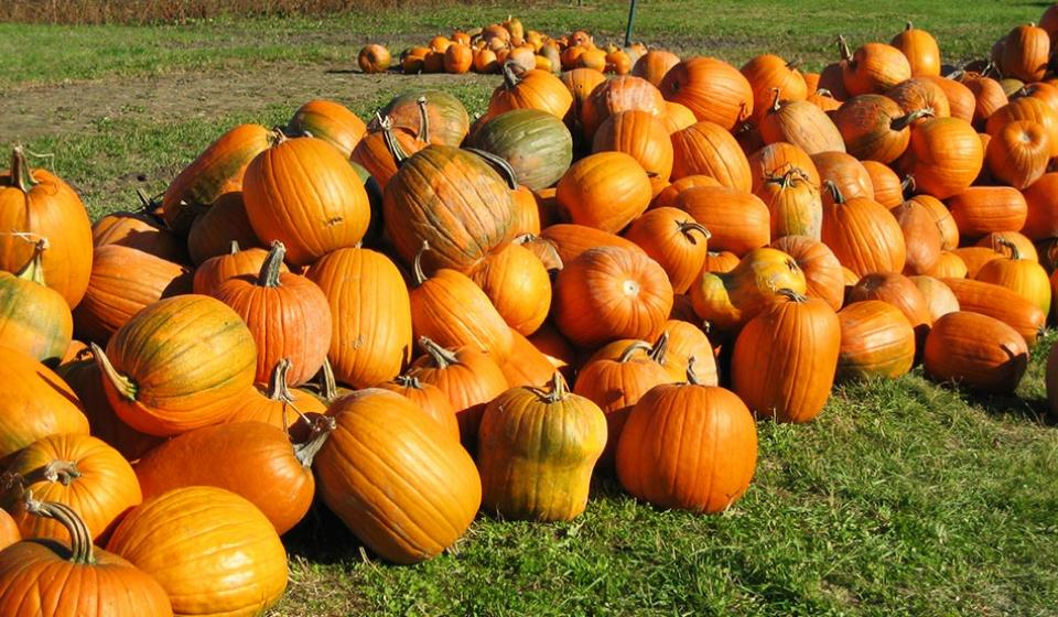 Pumpkins, fall