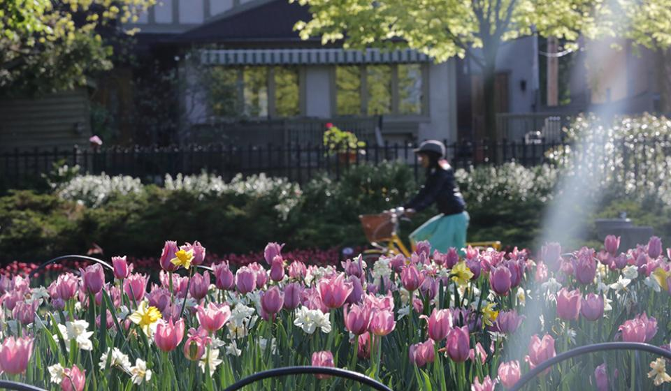 Canadian Tulip Festival - cycling