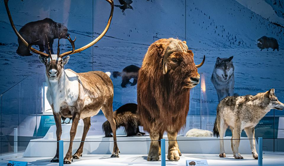 Planet Ice: Mysteries of the Ice Age | Canadian Museum of Nature