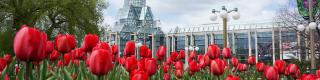 National Gallery of Canada, Tulips, Spring