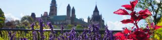 Parliament Hill, Summer